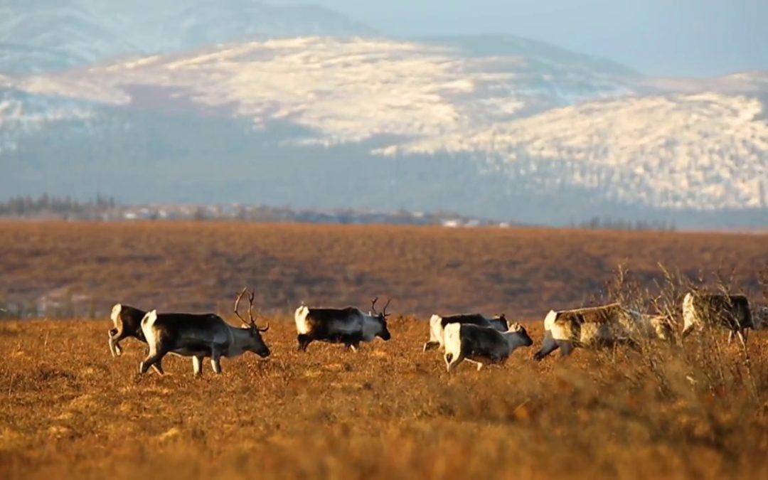 La Tierra Invisible – Viaje por Alaska junto al Fotógrafo Mario Davalos