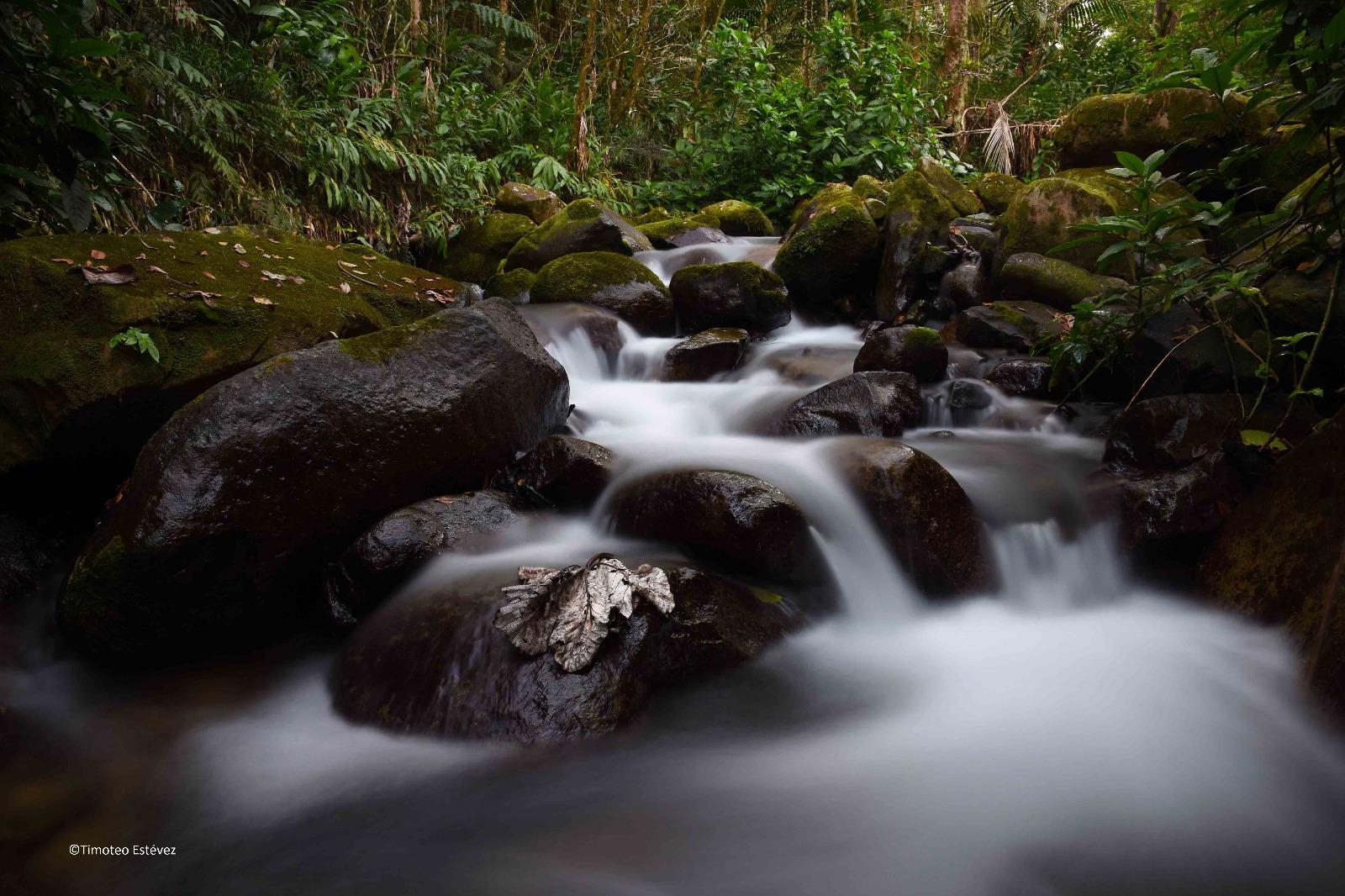 Excursión Reserva Científica de Ebano Verde
